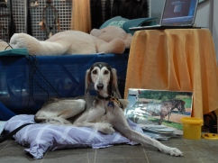 Hund-auf-Ausstellung-Nov-09